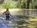 В Ботаническом саду КФУ зацвела «королева воды»