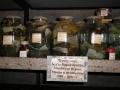 Бентосные-организмы-из-фондов-коллекции