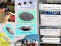 Фотографии-микроводорослей-бентоса-Черного-моря
