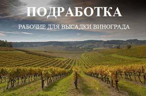 Вакансия ГУП «Севастопольский винодельческий завод»